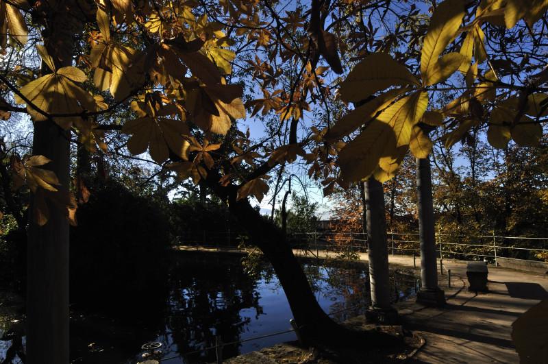 besarse en granada.hojas de estanque