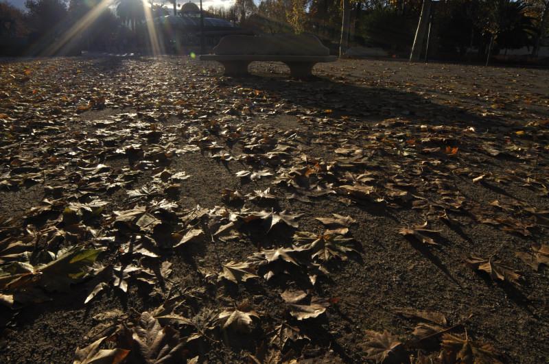 paseo del salon, banco y hojas