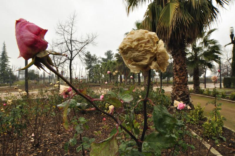parque garcia lorca, 2 rosas