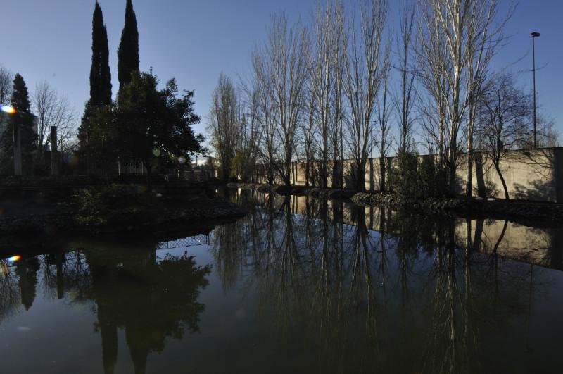 parque garcia lorca, arboles alsol