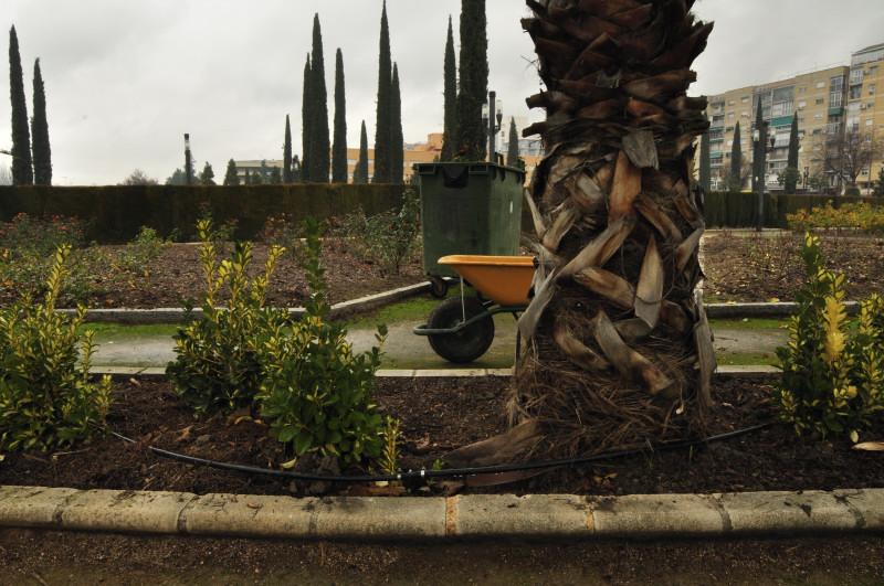 parque garcia lorca, carro tras la palmera
