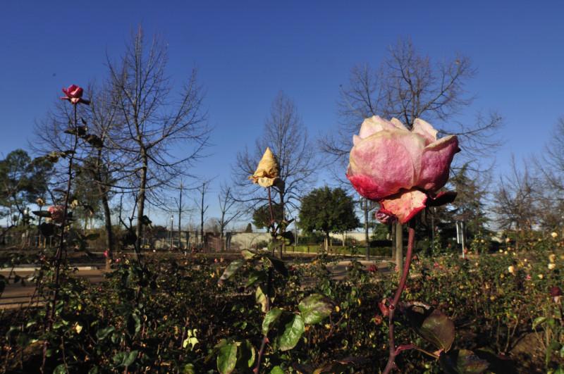 parque garcia lorca, dos rosas al sol