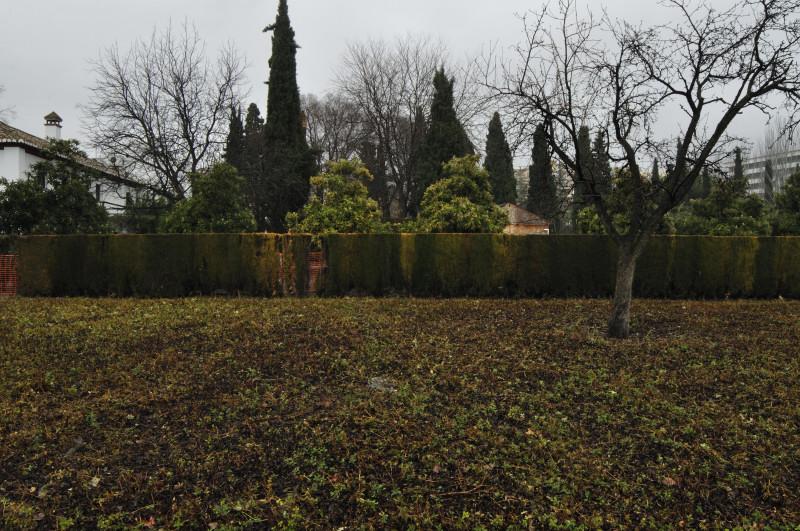 parque garcia lorca, lineas arboles