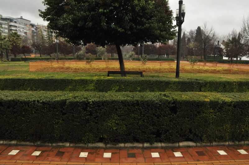 parque garcia lorca, lineas, setos,arbol