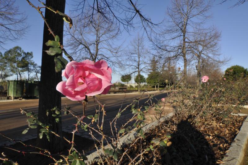 parque garcia lorca, rosa al sol