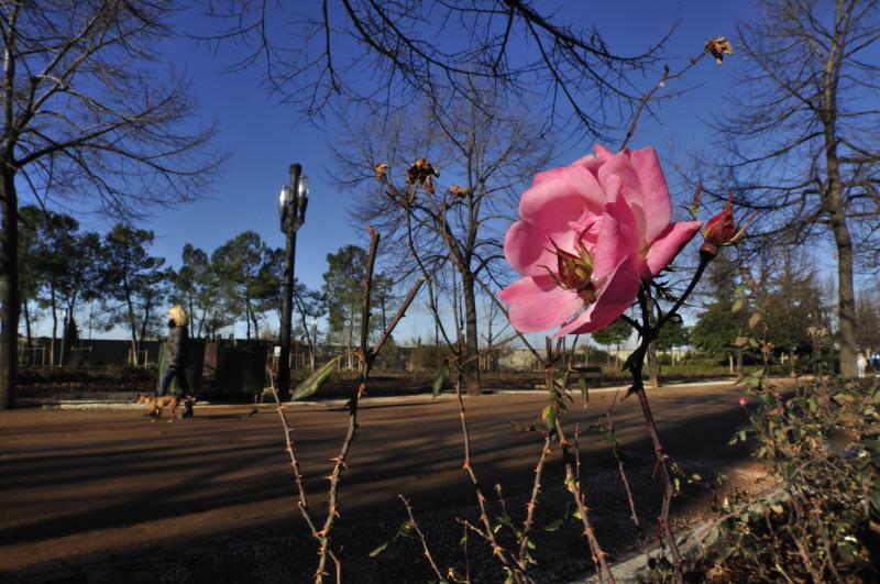 parque garcia lorca, rosa y paseo