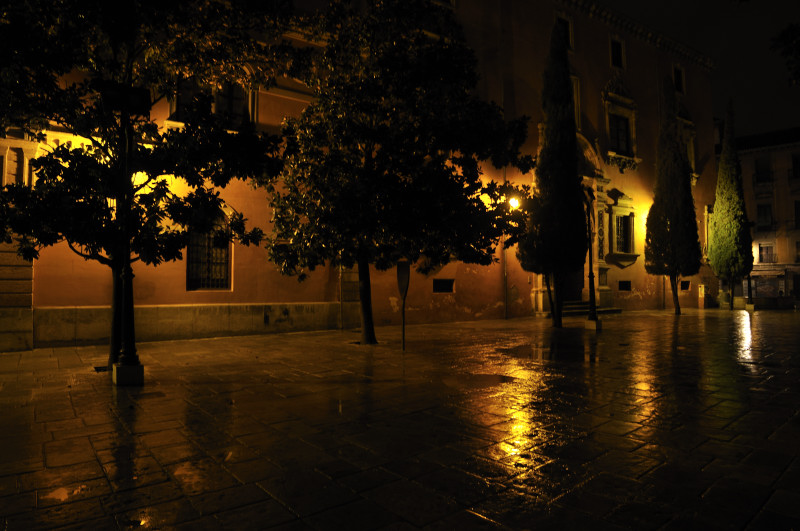 árboles nocturnos